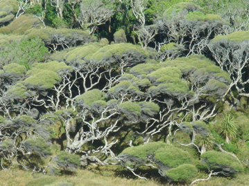 Near Farewell Spit, New Zealand, windblown trees